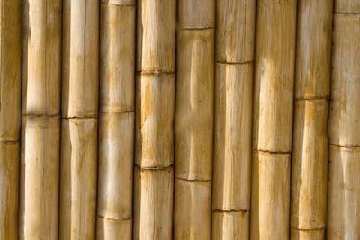 No es fácil la vida del moderador - Página 2 Ca_a_bambu-001-1