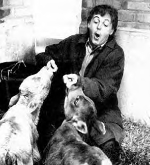 McCartney with farm animals