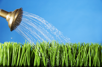 Lead Nurturing: Watering Can
