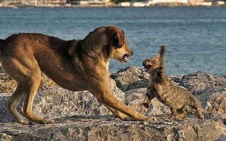 fighting dog and cat
