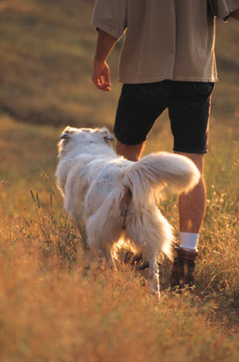 dog and man walking