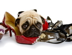 Bad Dog? We Can Help!