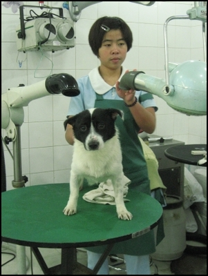 Xiao Bai with the groomers
