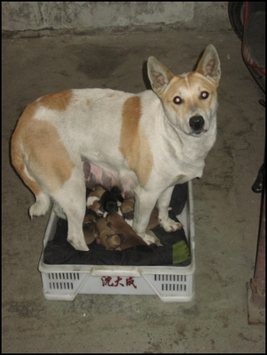 Mother and her pups