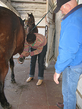 cleaning hoofs