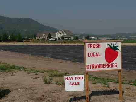 Strawberries for sale