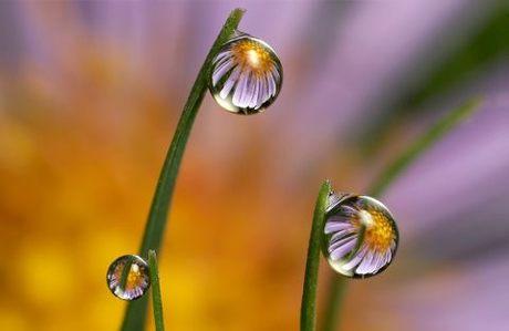 drops.jpg